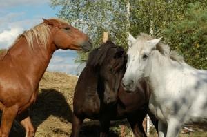 лошади рязань рико
