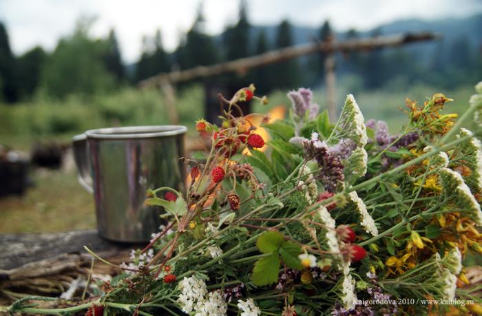 какую травку можно собирать для чая